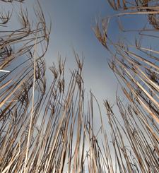 ETI seeking partners for new biomass pre-treatment project
